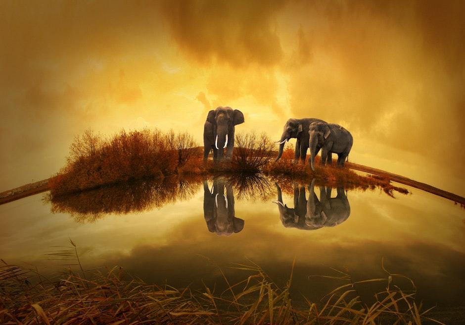 3 Grey Elephants Under Yellow Sky