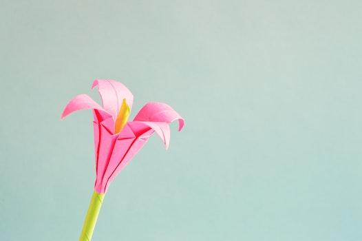 Pink 4 Petaled Flower
