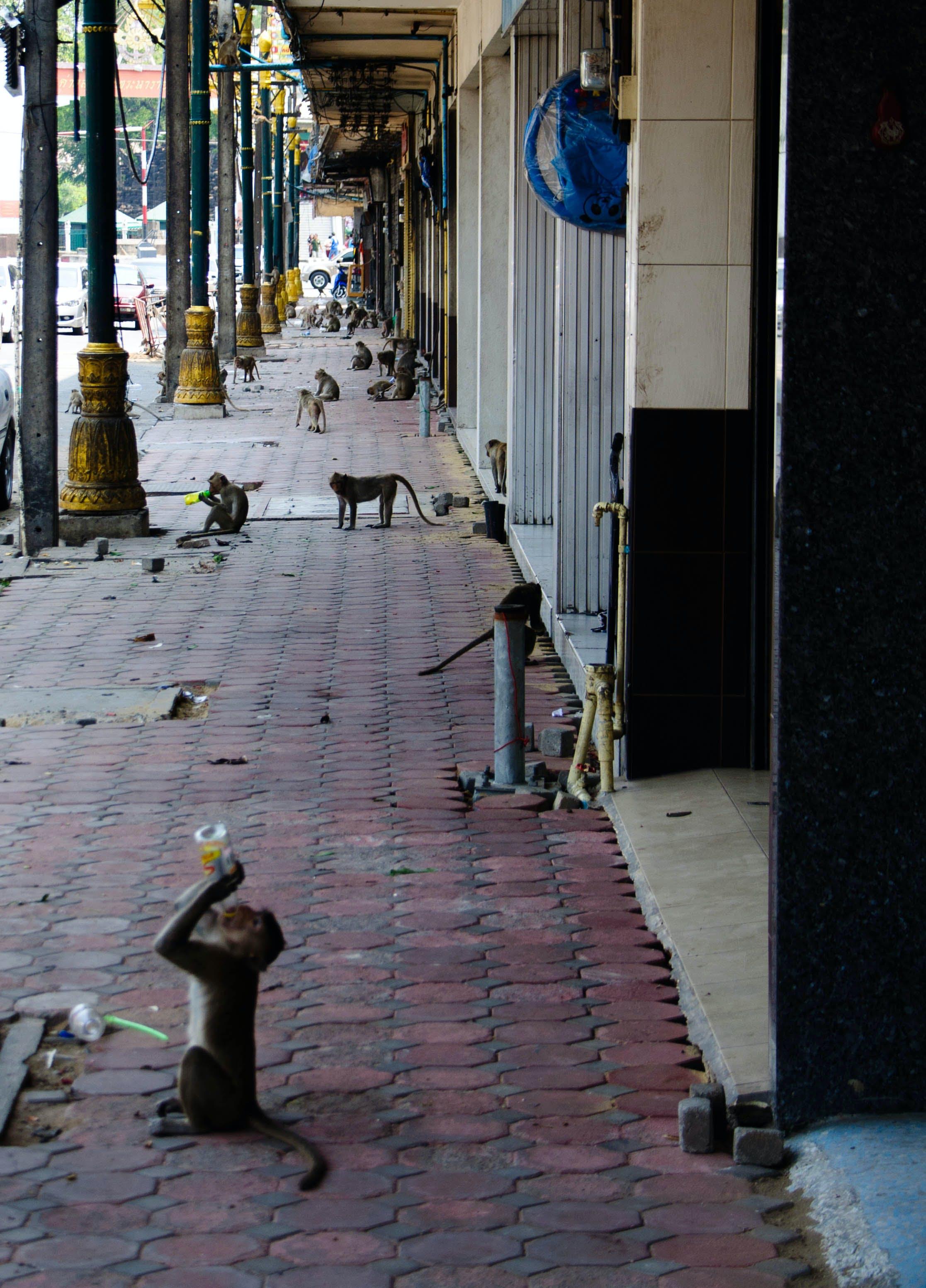 Free stock photo of Lopburi