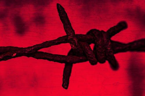 Gratis arkivbilde med blod, dø, død, ekstrem