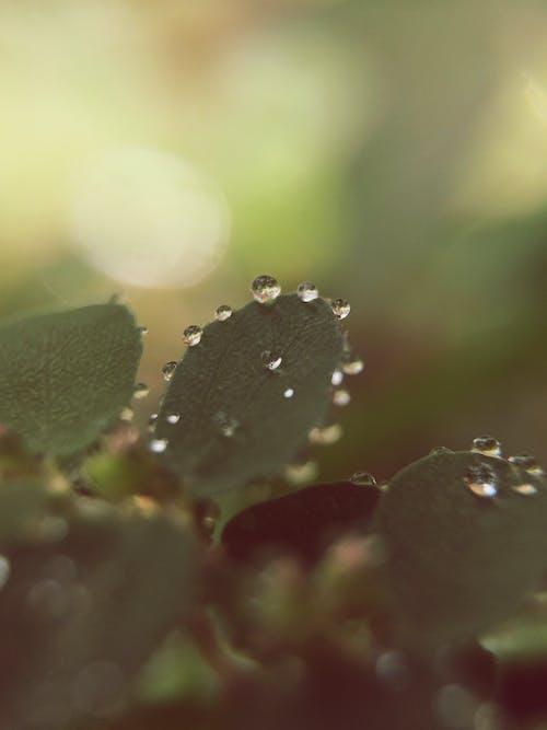 Fotobanka sbezplatnými fotkami na tému kvapky vody, makro, príroda, rastlina
