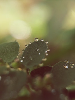 Free stock photo of nature, plant, macro, water drops