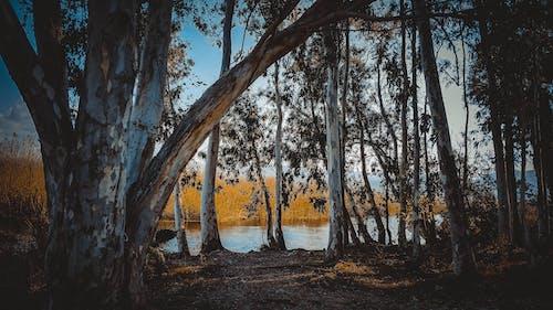 Kostenloses Stock Foto zu bäume, holz, natur, wald