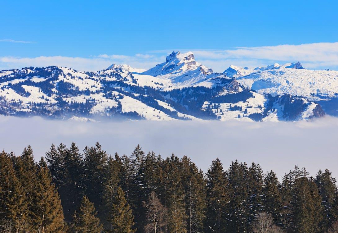 Альпы, вершина, вечнозеленый