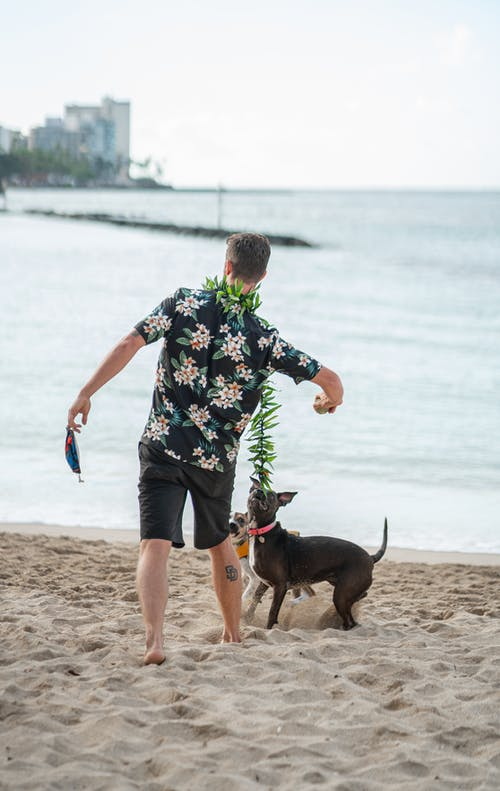 Faceless man playing with dog on sandy beach