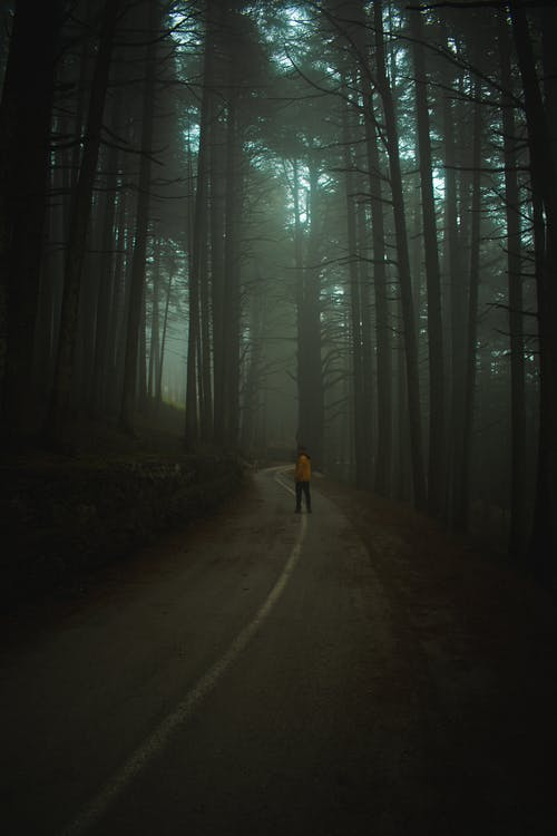 Person in Black Jacket Walking on Pathway in Between Trees