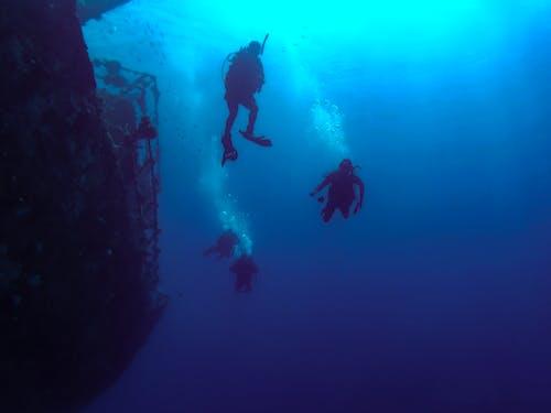 Fotos de stock gratuitas de bajo el agua, buceadores, buceo
