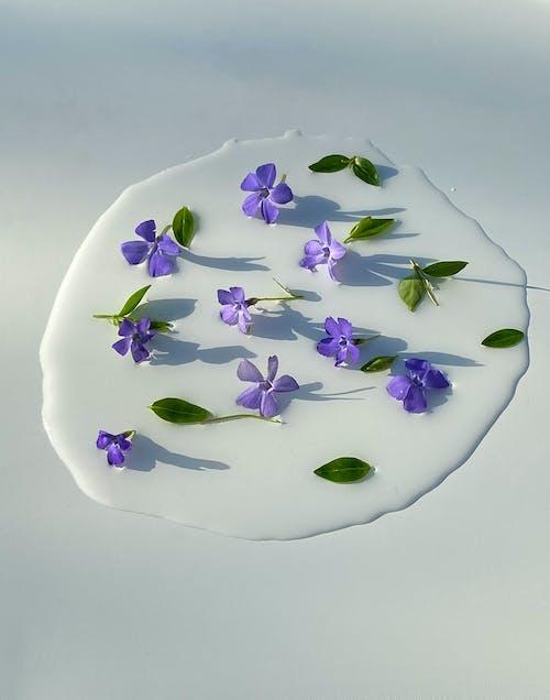 Kostenloses Stock Foto zu aroma, blatt, blau