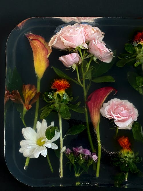 คลังภาพถ่ายฟรี ของ carthamus, zantedeschia, กลีบดอกไม้