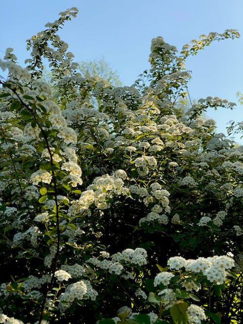 Gratis lagerfoto af blå himmel, blad, blomst