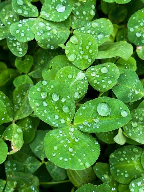 Gratis lagerfoto af blad, blågrøn, botanik