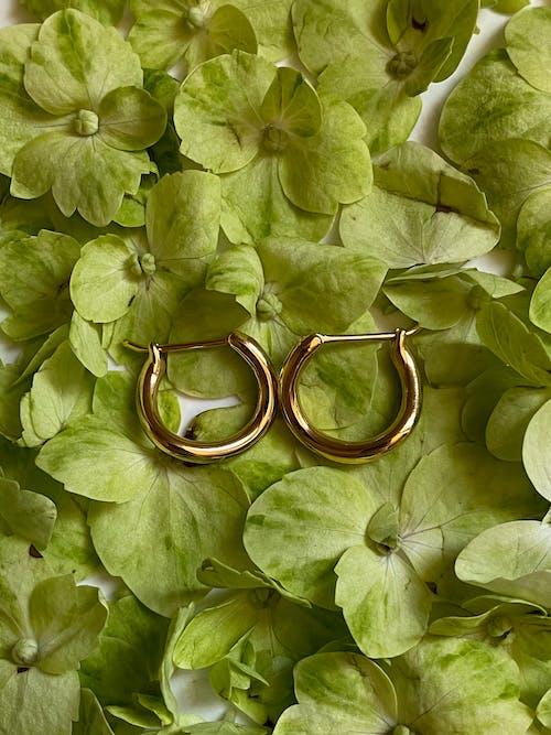 คลังภาพถ่ายฟรี ของ bijouterie, กลิ่น, กลีบดอกไม้