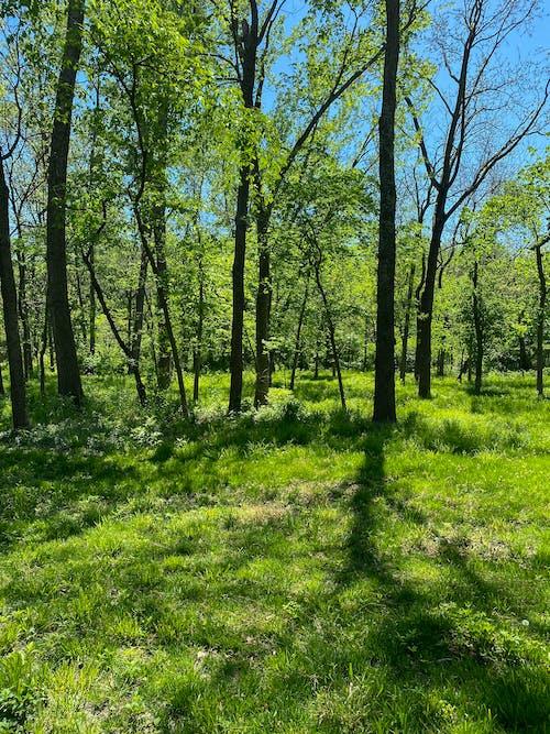 公園, 冷靜, 原本 的 免費圖庫相片
