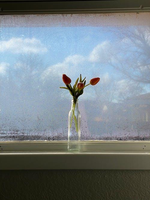 Ingyenes stockfotó ablak, ablakpárkány, békés témában