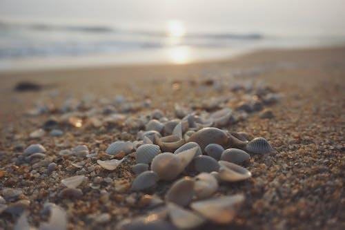 Photos gratuites de coquillages, Malaisie, plage