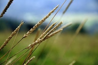 nature, field, agriculture