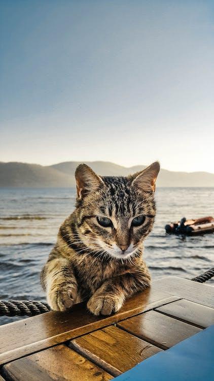 animal, animal de casă, animal de companie