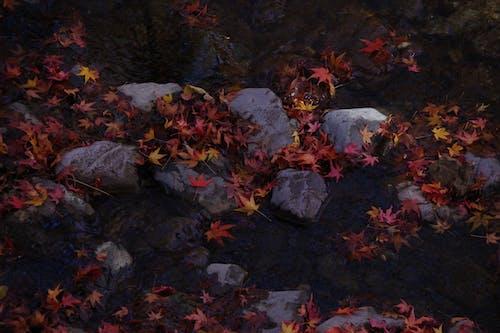 Immagine gratuita di atmosfera de outono, autunno, cadere