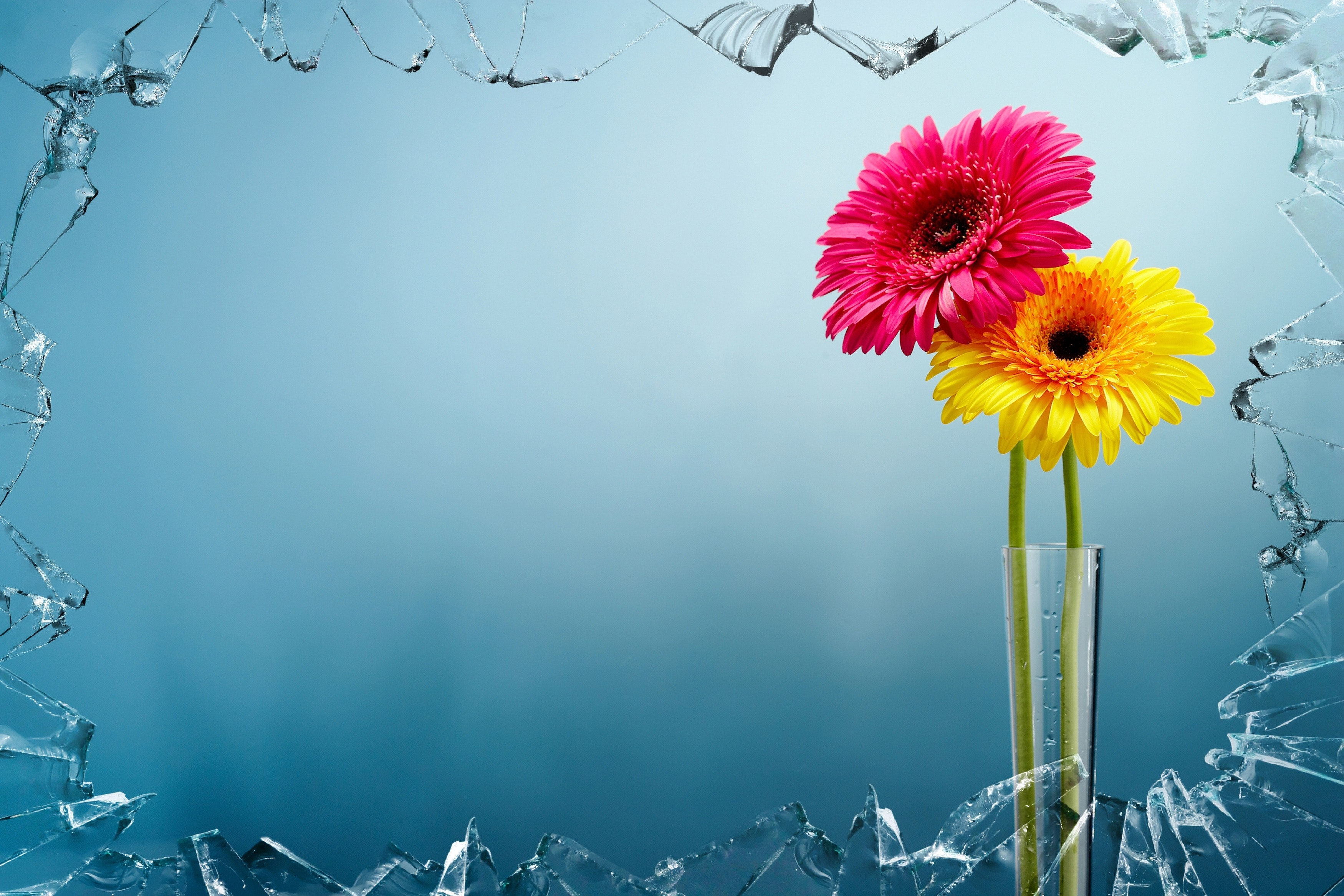 Yellow And Pink Flowers View Behind Broken Glass Free Stock Photo