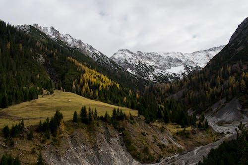 山, 森林, 阿爾卑斯山, 雪 的 免費圖庫相片
