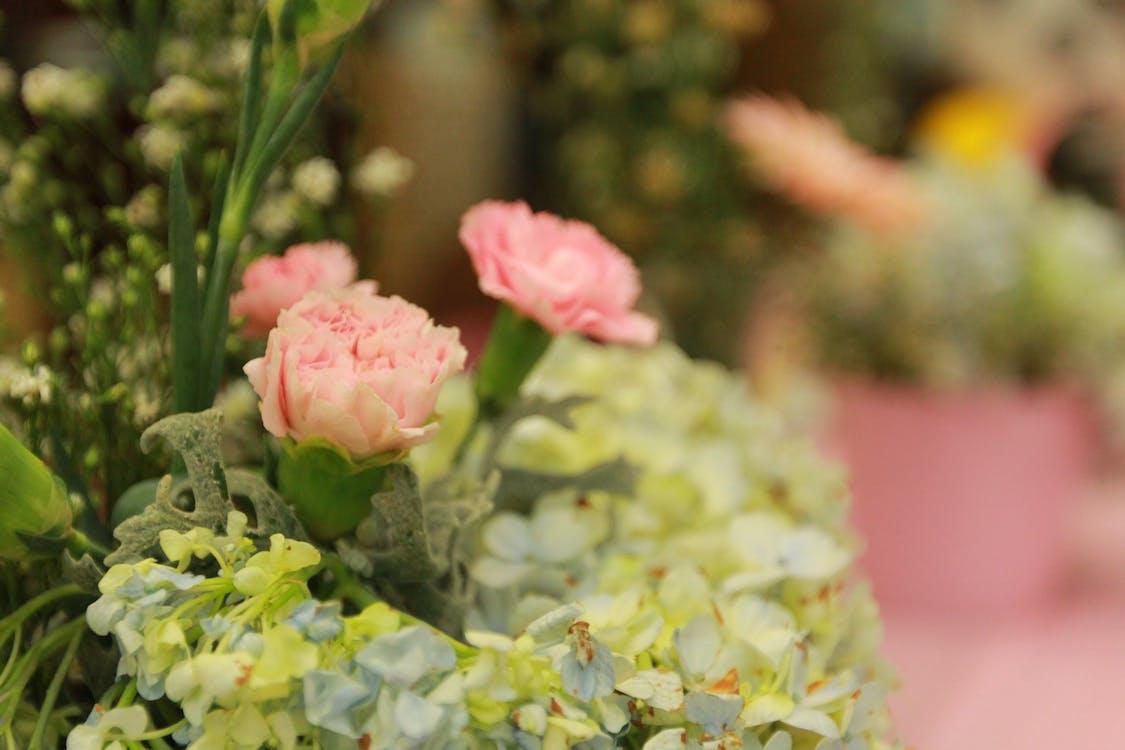 Free stock photo of beautiful, beautiful flowers