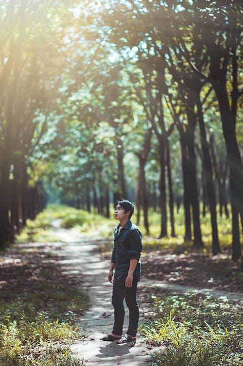 Hombre Mirando Los árboles
