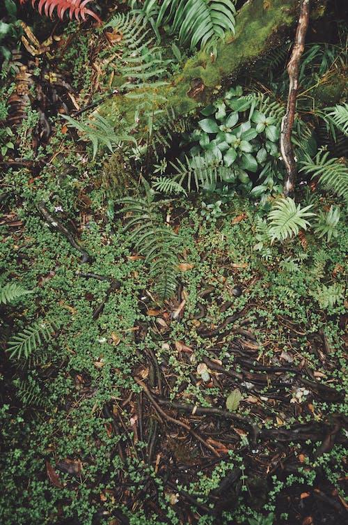 Photos gratuites de feuillage, feuilles, forêt tropicale