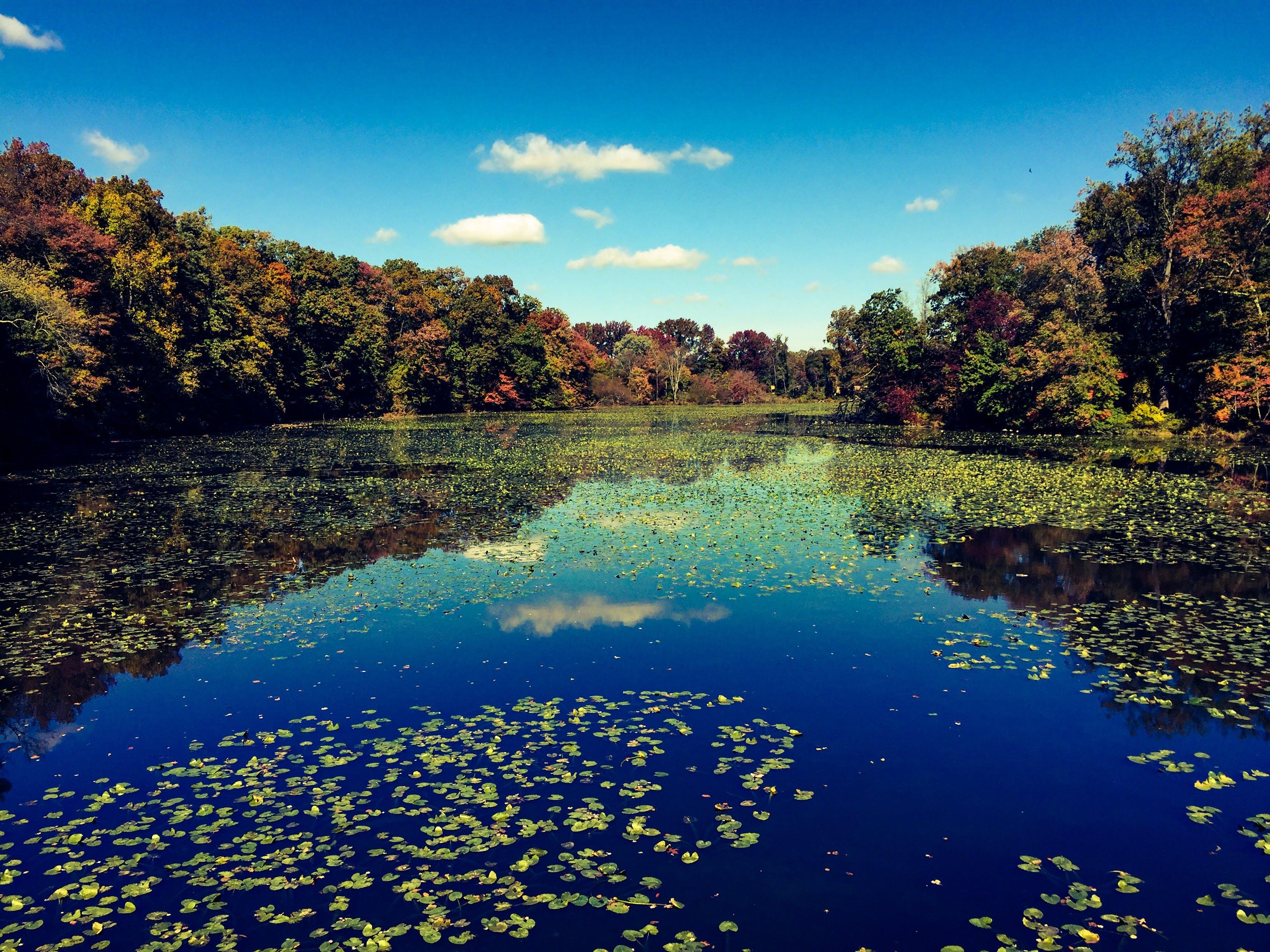 Kostenloses Stock Foto zu bäume, landschaft, natur, reflektierung
