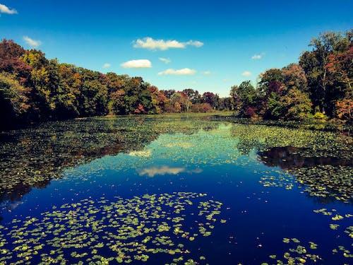 Základová fotografie zdarma na téma jezero, krajina, odraz