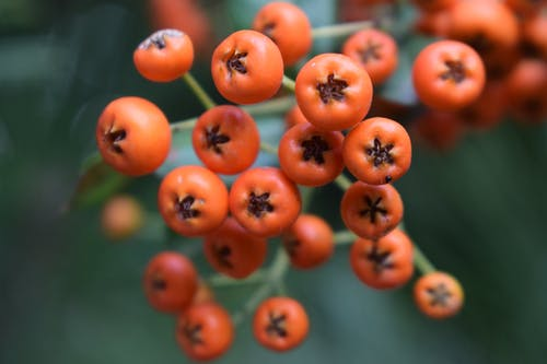 Free stock photo of berries, fruits, red