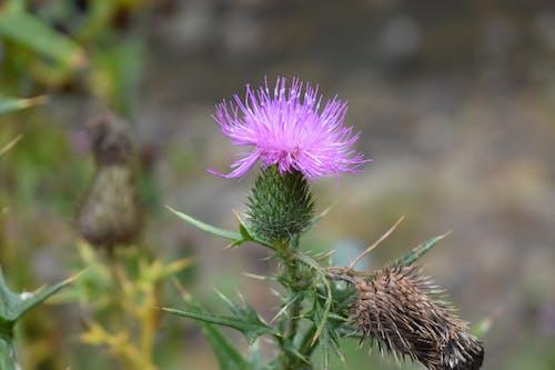Free stock photo of flower, green, purple
