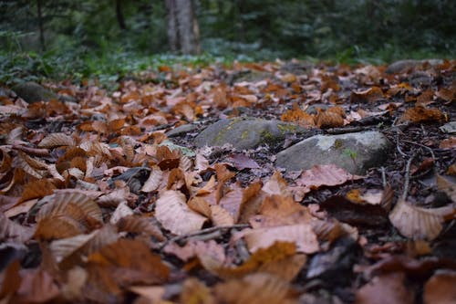 Free stock photo of closeup, dried leaves, forest
