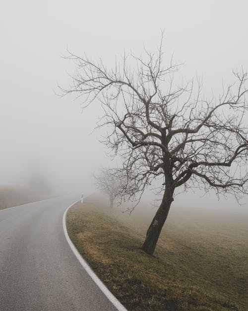 Leafless Tree on the Side of the Road