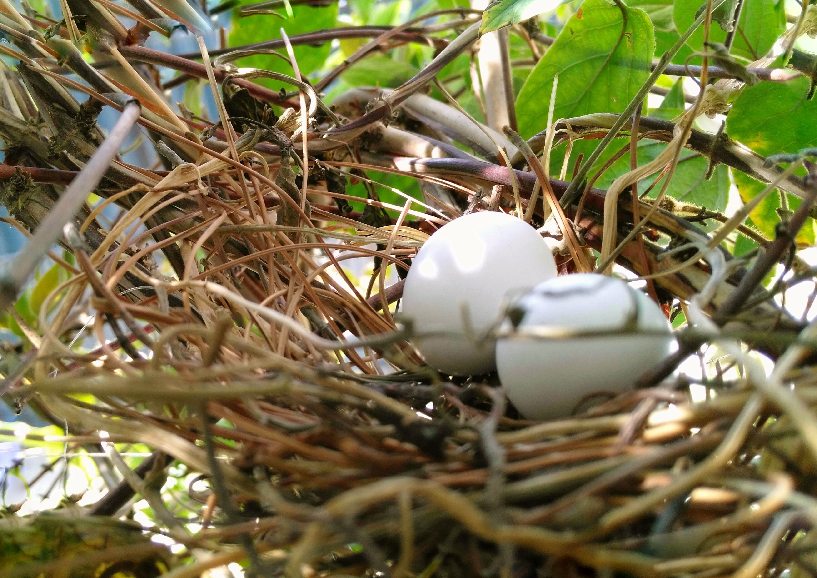 Free stock photo of birdegges, birdhouse, birdnest, eggs
