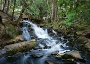 nature, water, forest