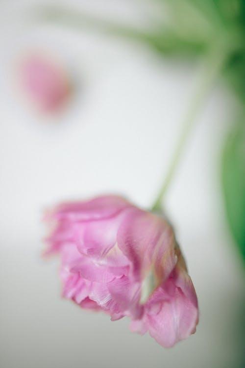 Ảnh lưu trữ miễn phí về cận cảnh, chụp ảnh hoa, Hoa hồng