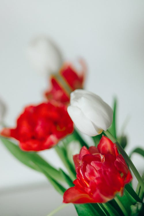 Fotos de stock gratuitas de amor, belleza, blanco
