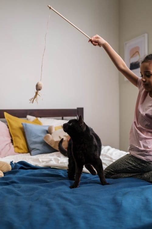 Kid Playing with Black Cat