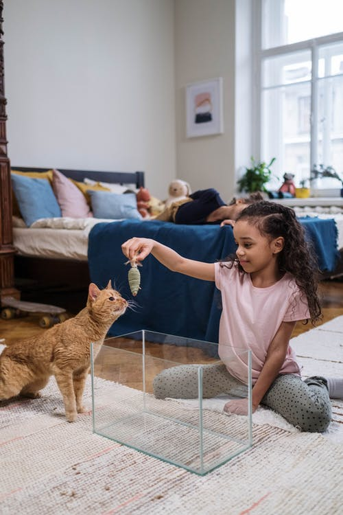 Girl Playing with Her Pet Cat