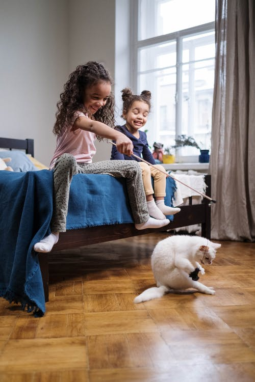 Kids Playing with White Cat