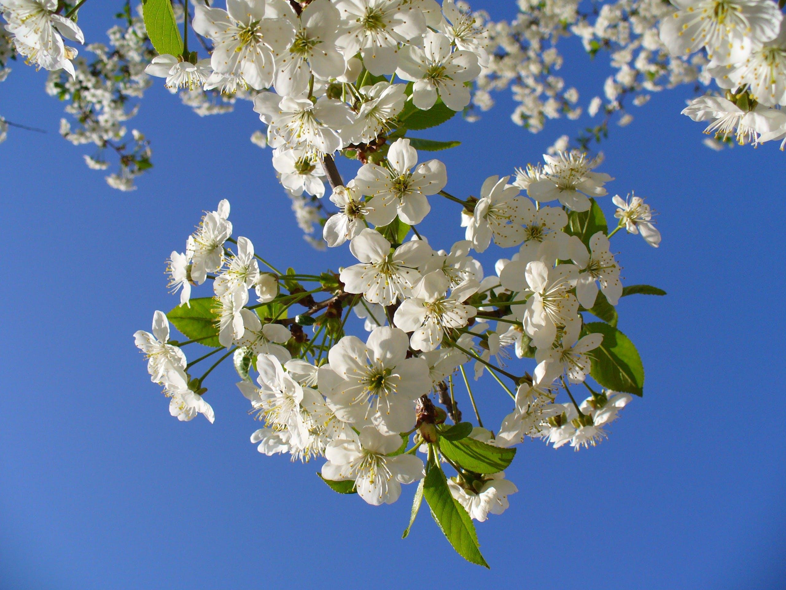 White Clustered Flower