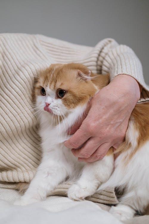 Foto profissional grátis de abraçando, abraço, adorável