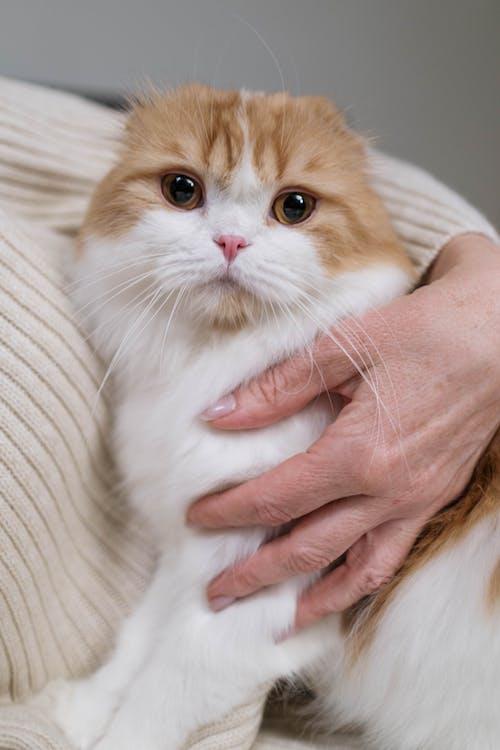 Foto profissional grátis de abraço, adorável, afeto