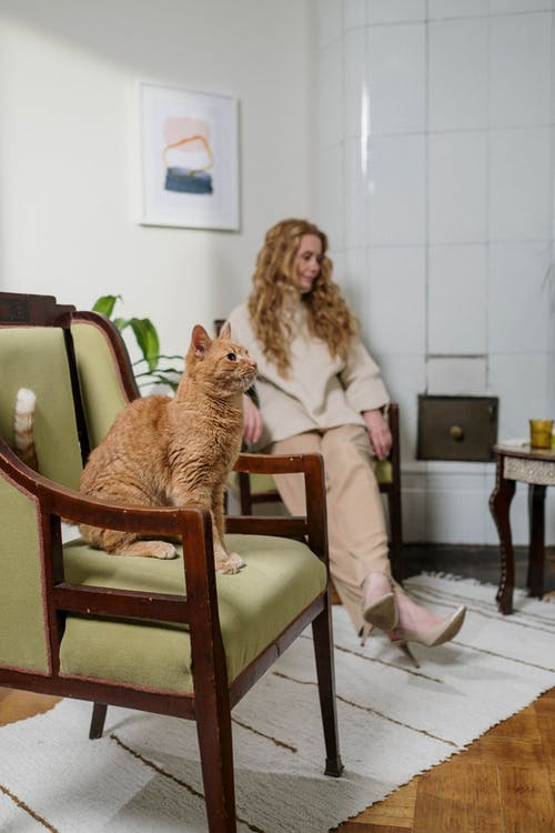 Woman Sitting on Chair with Her Cat