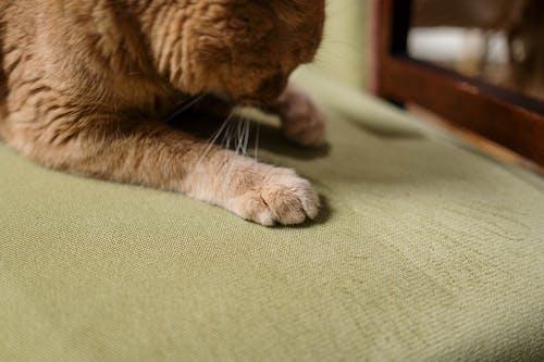 Orange Tabby Cat Lying on Green Chair