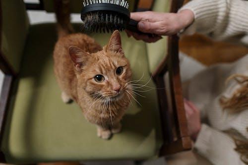 Orange Tabby Cat on Chair