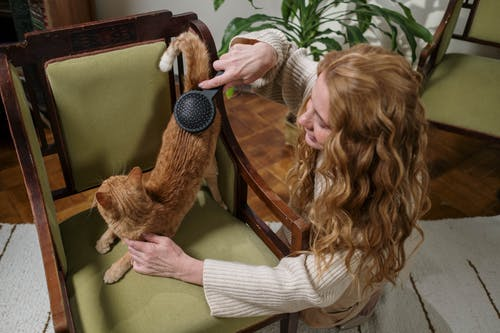 Woman Brushing Her Pet Cat