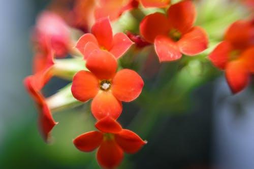 Free stock photo of beautiful flowers, macro, macro photography