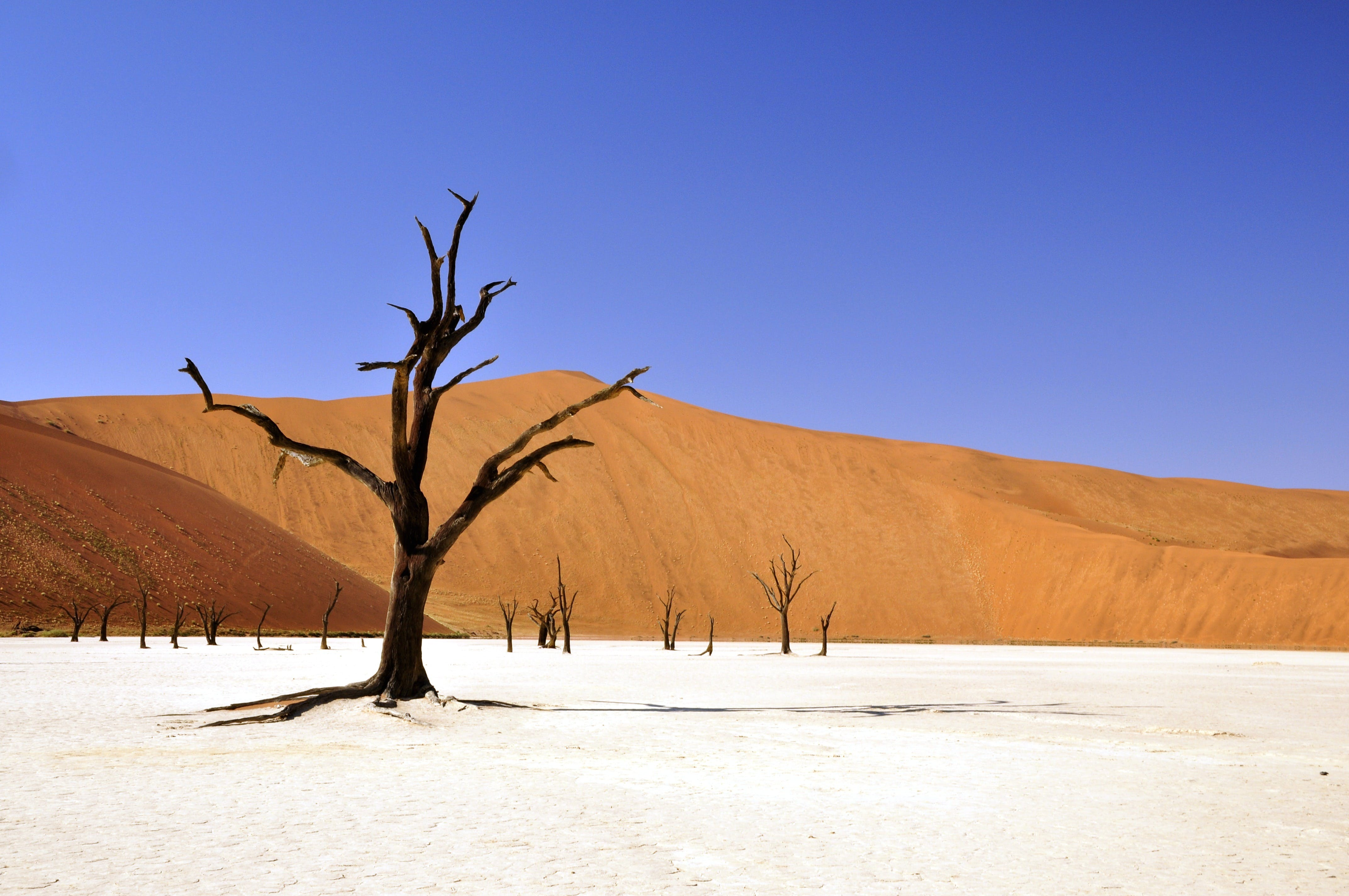 Brown Leafless Tree on Sandy Soil during Daytime
