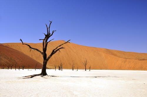 Foto stok gratis alam, gersang, gurun pasir, kekeringan